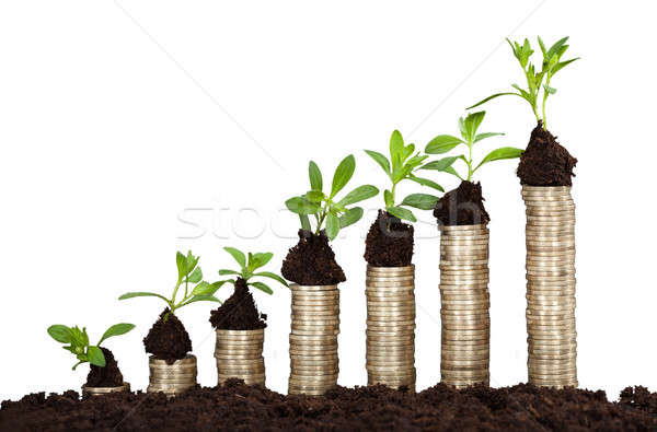 Saplings On Stack Of Coins Stock photo © AndreyPopov