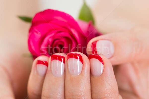 Manicured Nail With Nail Varnish Holding Rose Stock photo © AndreyPopov