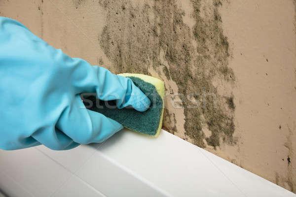 Huishoudster schoonmaken muur spons Stockfoto © AndreyPopov