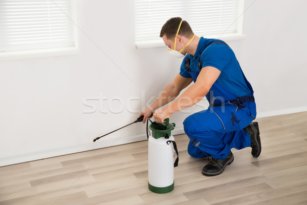 Worker Spraying Pesticide On Wall At Home Stock photo © AndreyPopov