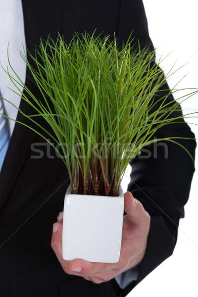 Businessman with a green plant in his pocket Stock photo © AndreyPopov