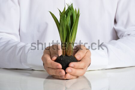 Businessperson Giving Sapling To The Businessman Stock photo © AndreyPopov