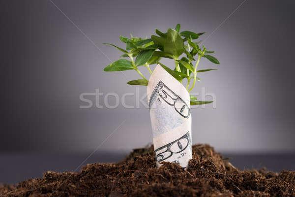 Geld groeiend bodem jonge boom dollar Bill Stockfoto © AndreyPopov