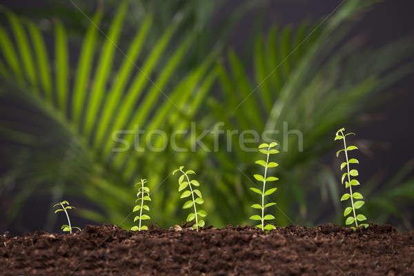 Impianto crescita suolo foto fresche verde Foto d'archivio © AndreyPopov