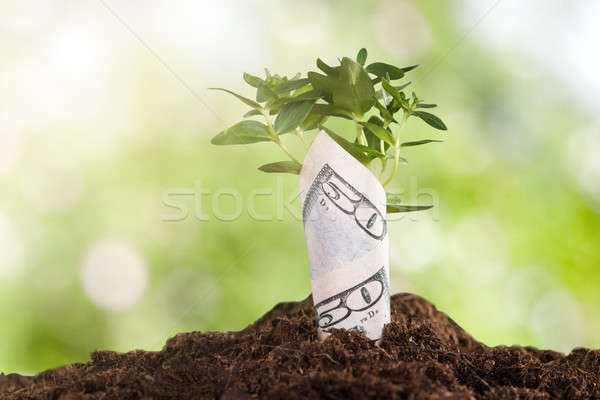 Sapling Wrapped In Dollar Bill Stock photo © AndreyPopov