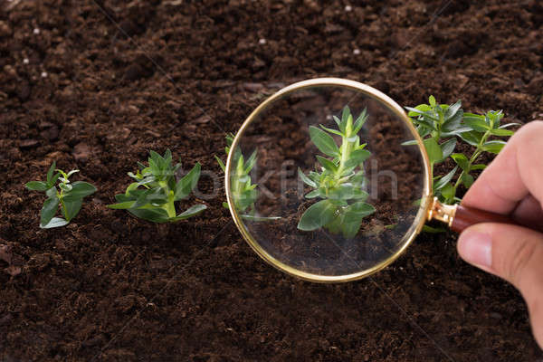 Inspecting sapling with magnifying glass Stock photo © AndreyPopov