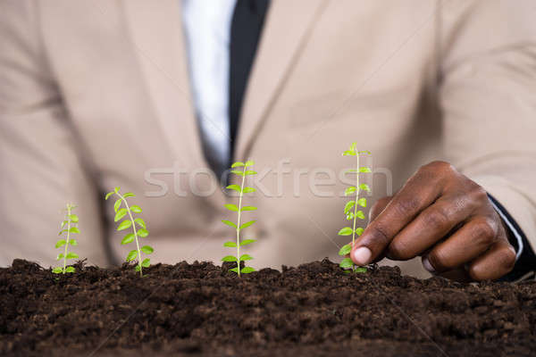 Persone mano piccolo impianto verde Foto d'archivio © AndreyPopov