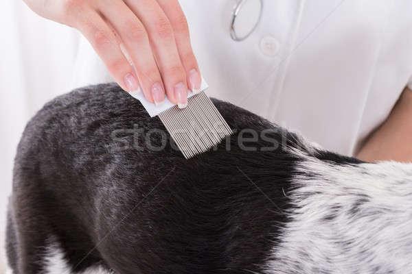 állatorvos megvizsgál kutyák haj fésű közelkép Stock fotó © AndreyPopov