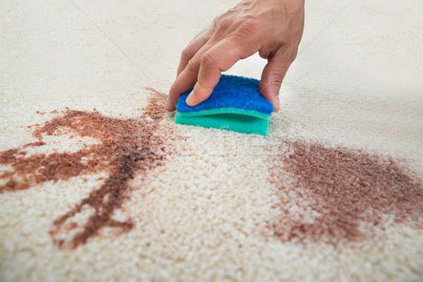 Hombre limpieza mancha alfombra esponja imagen Foto stock © AndreyPopov