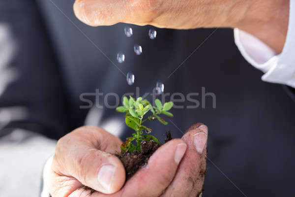 Person Watering To Sapling Stock photo © AndreyPopov