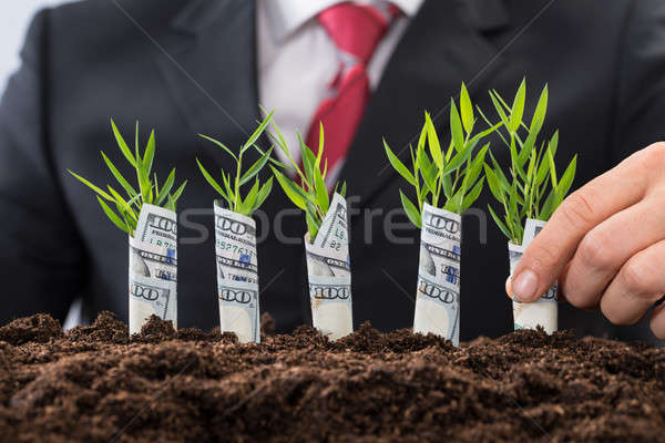 Businessman Holding Saplings Covered With American Dollar Stock photo © AndreyPopov