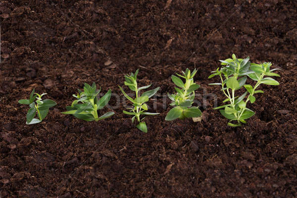 Business growth concept Stock photo © AndreyPopov