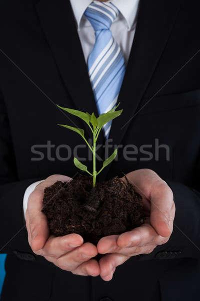 Empresario árbol joven jóvenes manos naturaleza Foto stock © AndreyPopov
