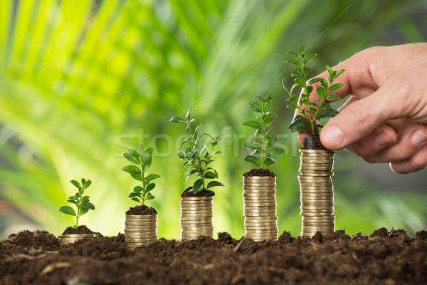 Pessoa mão pequeno planta Foto stock © AndreyPopov