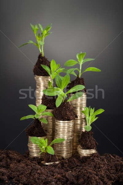 Monedas escritorio negro negocios naturaleza Foto stock © AndreyPopov