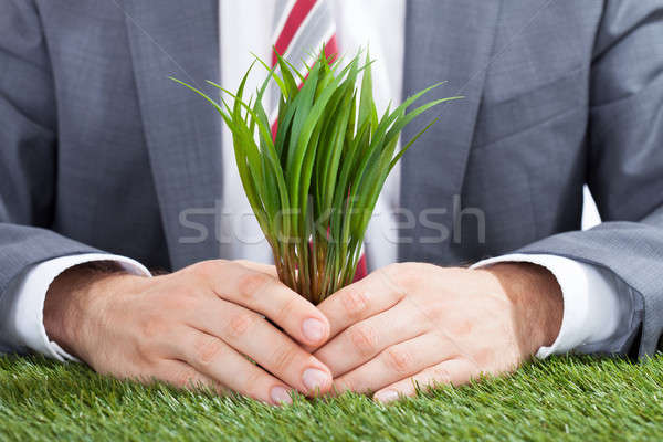 Businessman Holding Saplings On Meadow Stock photo © AndreyPopov