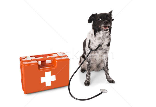 Dog With Stethoscope And First Aid Kit Stock photo © AndreyPopov