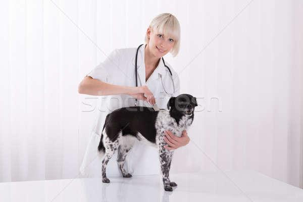 Weiblichen Tierarzt Hunde Haar Kamm Stock foto © AndreyPopov