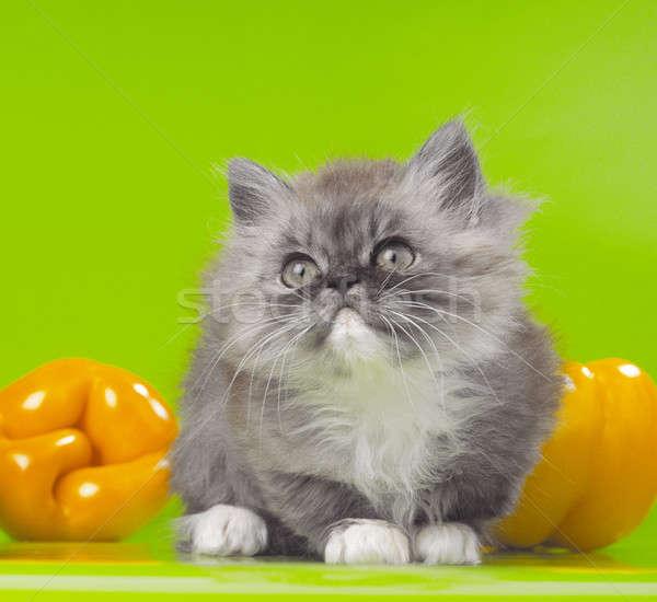 Kedi portre kedi yavrusu gözler arka plan yeşil Stok fotoğraf © Andriy-Solovyov