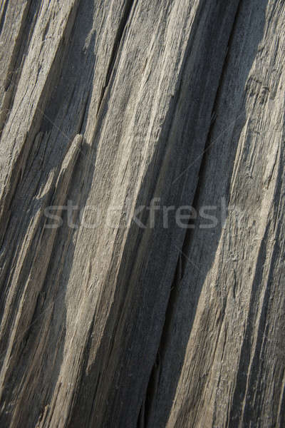 surface of the wood Stock photo © Andriy-Solovyov