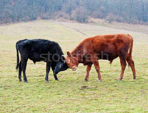 Twee butt groen gras berg voorjaar Stockfoto © Andriy-Solovyov