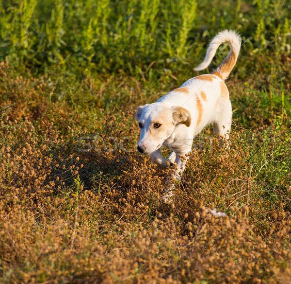 Köpek aile köy kurutulmuş otlar yaz Stok fotoğraf © Andriy-Solovyov