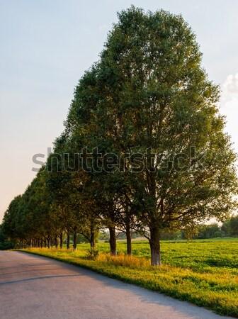 Ağaç manzara ağaçlar yol Stok fotoğraf © Andriy-Solovyov