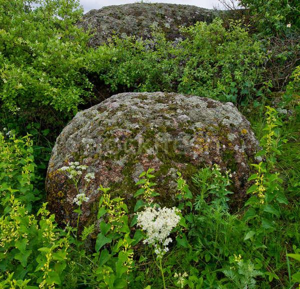 Granito pedras grama belo grande ambiente Foto stock © Andriy-Solovyov