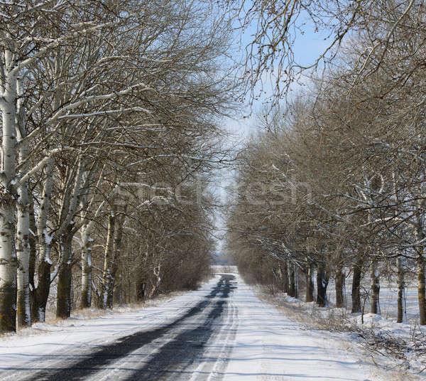 Estrada beco árvores inverno dia árvore Foto stock © Andriy-Solovyov