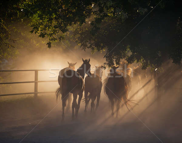 herd of horses Stock photo © Andriy-Solovyov