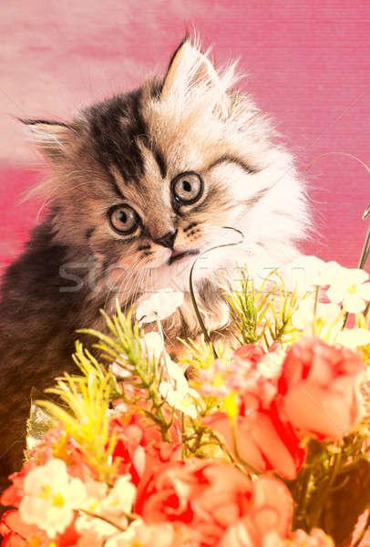 Foto d'archivio: Gattino · domestico · rosa · famiglia · cat