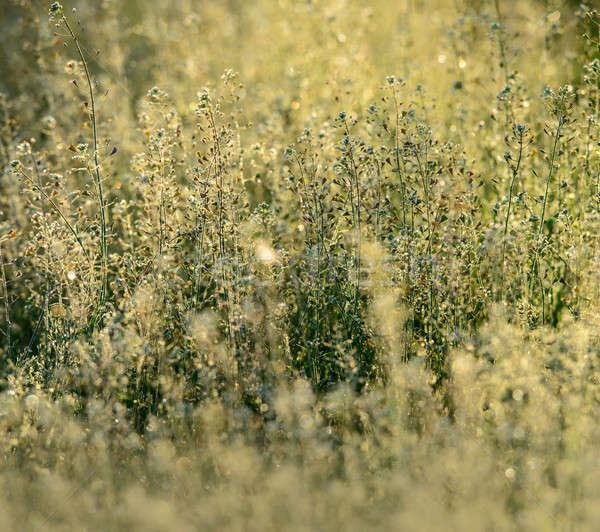 Bahar gün çiçekli bitkiler bulanık yeşil Stok fotoğraf © Andriy-Solovyov