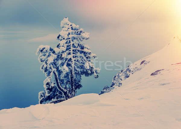 Egyedüli fenyőfa hó hegyek tájkép hegy Stock fotó © Andriy-Solovyov