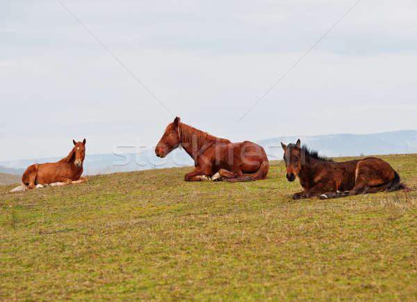 Horses on a pasture Stock photo © Andriy-Solovyov