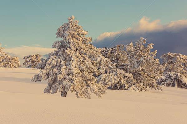 Pinho árvores coberto neve montanhas floresta Foto stock © Andriy-Solovyov