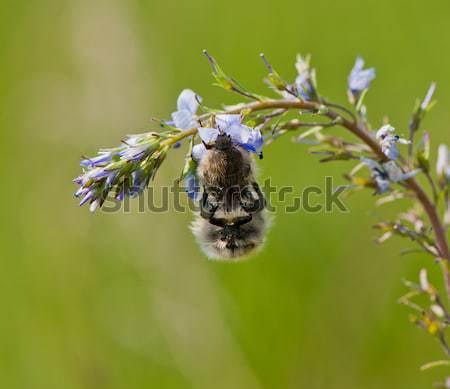 insect Stock photo © Andriy-Solovyov