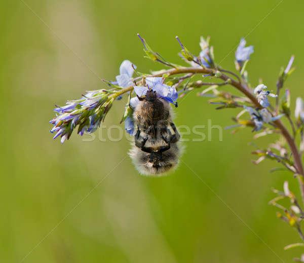 couple of bugs Stock photo © Andriy-Solovyov