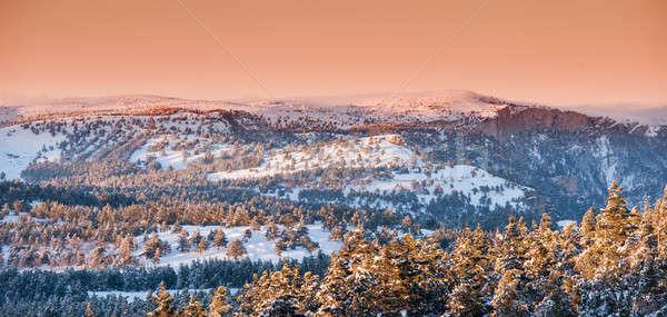 Inverno paisagem montanha pinho árvores coberto Foto stock © Andriy-Solovyov
