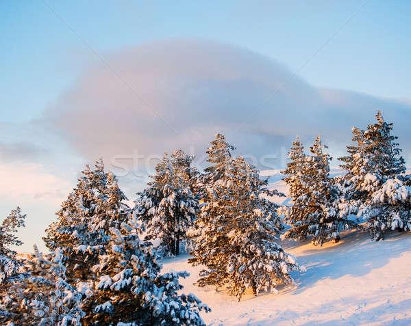 Kış manzara dağ çam ağaçlar kapalı Stok fotoğraf © Andriy-Solovyov