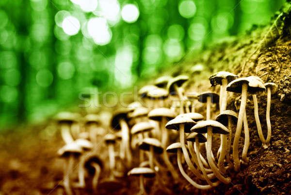 Gruppo funghi foresta famiglia albero estate Foto d'archivio © Anettphoto