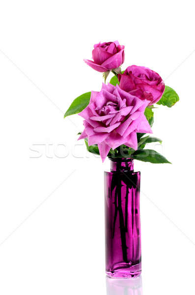 Purple roses in purple vase over white Stock photo © Anettphoto