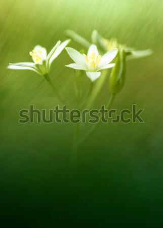 Tavaszi virágok lebeg sziget kicsi fehér virágok húsvét Stock fotó © Anettphoto