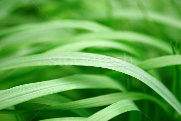 Green grass close-up Stock photo © Anettphoto