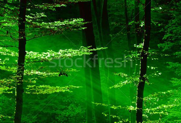 Lumini pădure razelor solare dimineaţă primăvară lemn Imagine de stoc © Anettphoto