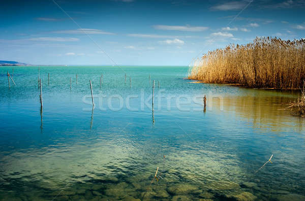 Blue lake with reed at summer Stock photo © Anettphoto