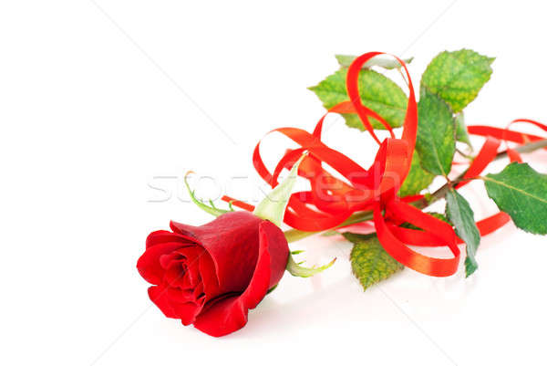 Red rose on the white Stock photo © Anettphoto