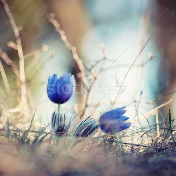Pár zárt virág szépség művészet növény Stock fotó © Anettphoto