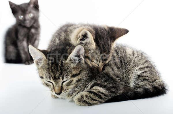 Liebe Einsamkeit Katzen weiß drei isoliert Stock foto © Anettphoto
