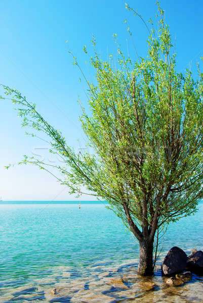 Green tree in the blue lake Stock photo © Anettphoto