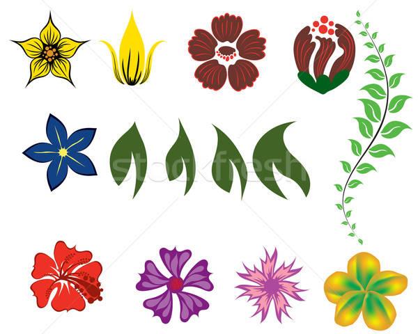 Photo stock: Fleur · différent · laisse · floral